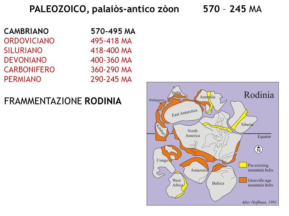 PALEOZOICO, palaiòs-antico zòon570 – 245 MA CAMBRIANO570-495 MA ORDOVICIANO495-418 MA SILURIANO418-400 MA DEVONIANO400-360 MA CARBONIFERO360-290 MA PE