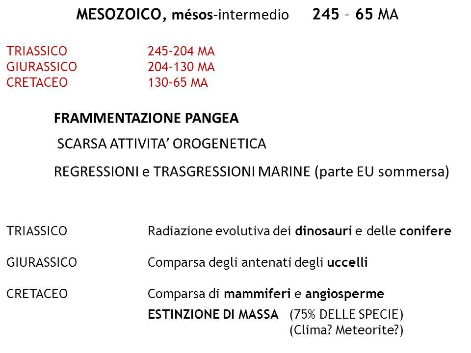 MESOZOICO, mésos-intermedio 245 – 65 MA TRIASSICO245-204 MA GIURASSICO204-130 MA CRETACEO130-65 MA FRAMMENTAZIONE PANGEA SCARSA ATTIVITA' OROGENETICA