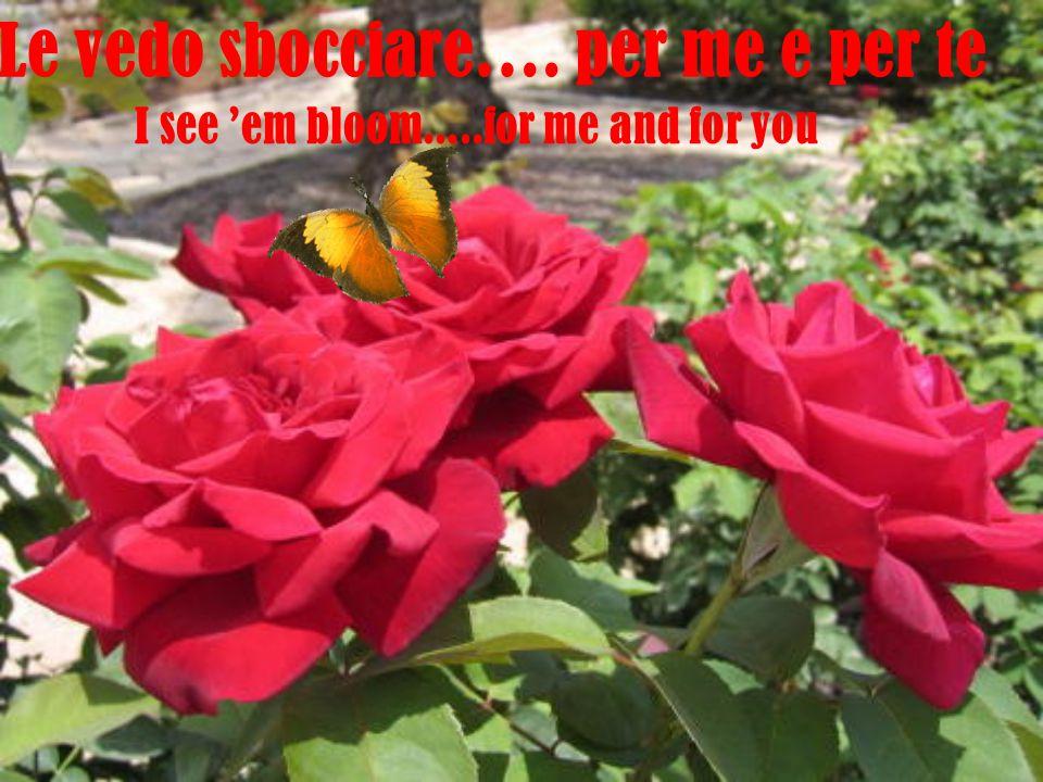 Le vedo sbocciare…. per me e per te I see 'em bloom.....for me and for you