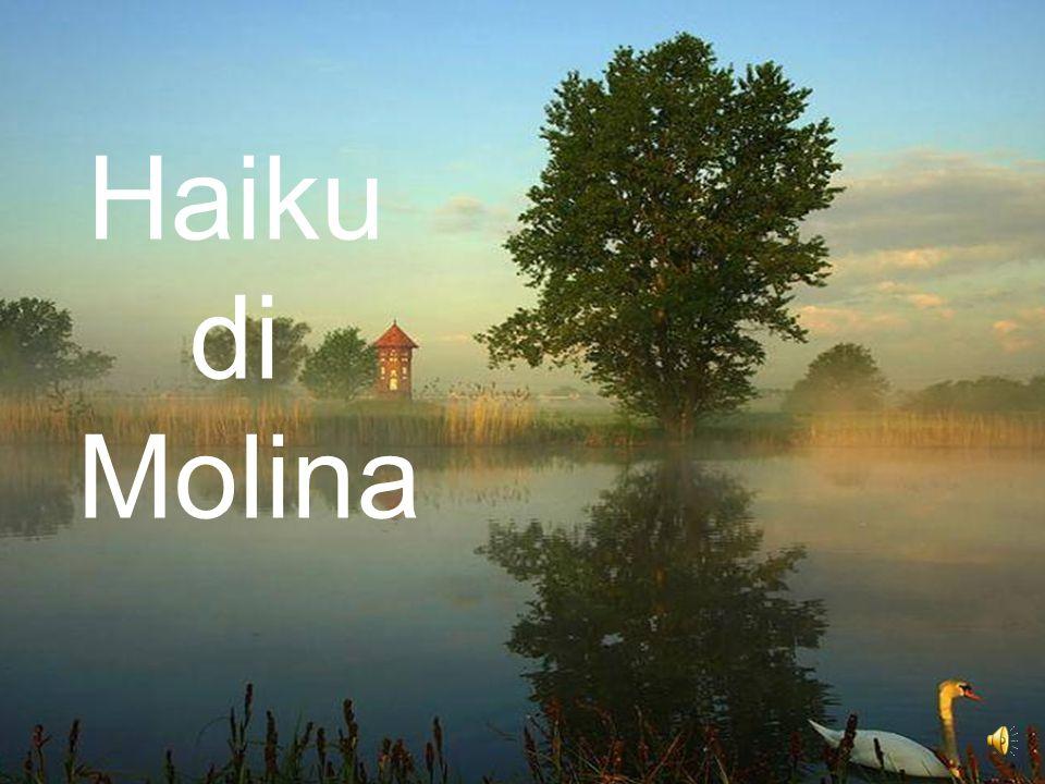 Haiku di Molina