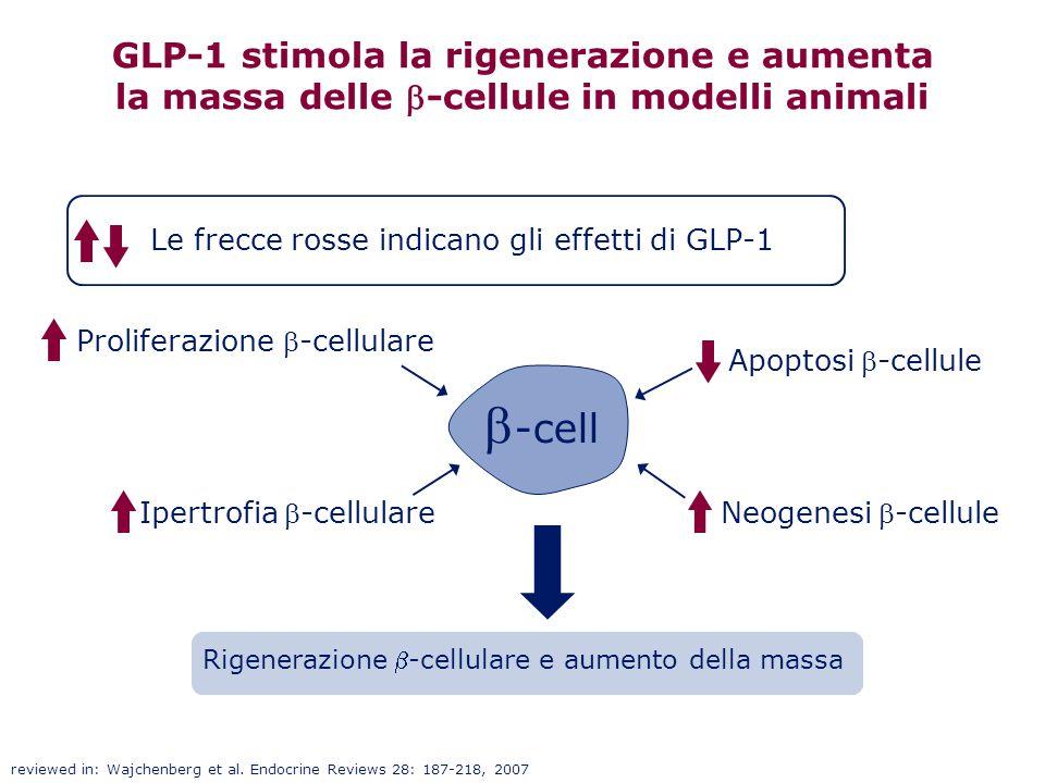 Proliferazione -cellulare Neogenesi-cellule Ipertrofia-cellulare Apoptosi-cellule GLP-1 stimola la rigenerazione e aumenta la massa delle -cel