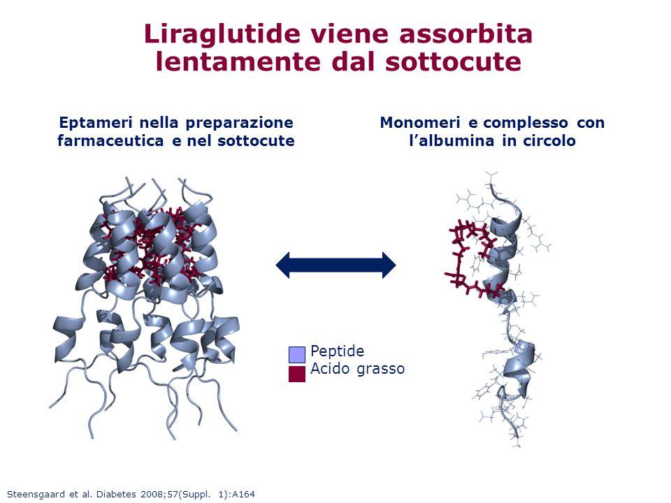 Peptide Acido grasso Liraglutide viene assorbita lentamente dal sottocute Eptameri nella preparazione farmaceutica e nel sottocute Monomeri e compless