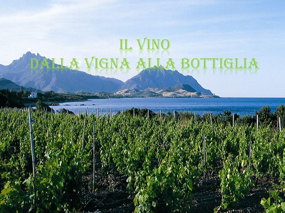 La presenta della vite in Sardegna ha radici remote testimoniate da una ricca storia millenaria e il vino è parte integrante di una cultura antica e affascinante che da sempre appartiene alle genti sarde.