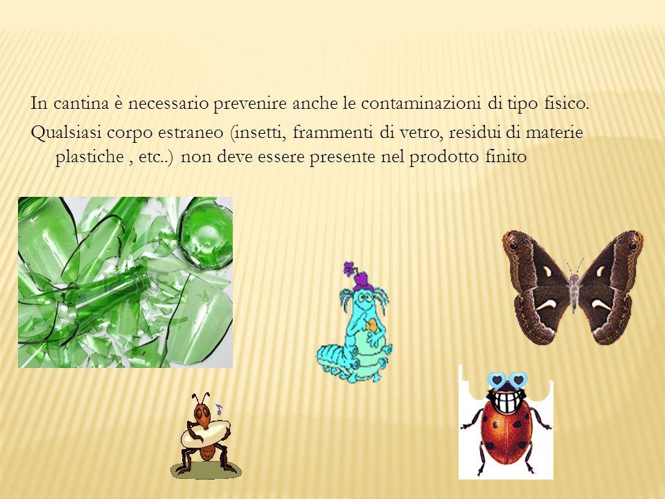 In cantina è necessario prevenire anche le contaminazioni di tipo fisico. Qualsiasi corpo estraneo (insetti, frammenti di vetro, residui di materie pl