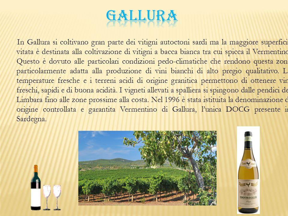 In Gallura si coltivano gran parte dei vitigni autoctoni sardi ma la maggiore superficie vitata è destinata alla coltivazione di vitigni a bacca bianc