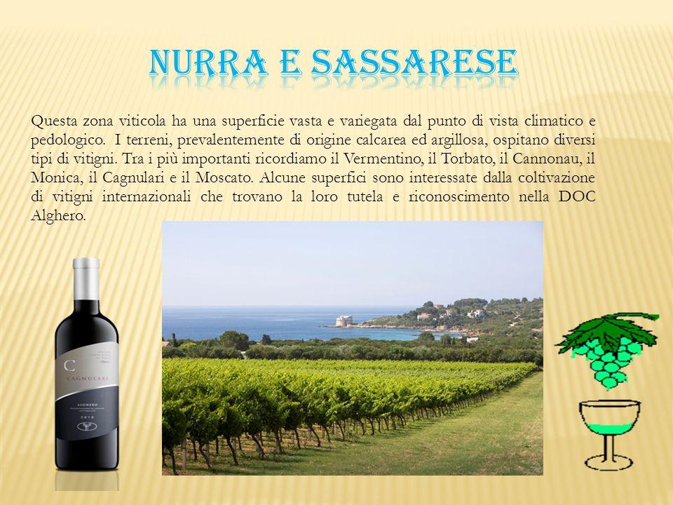 Questa zona viticola ha una superficie vasta e variegata dal punto di vista climatico e pedologico. I terreni, prevalentemente di origine calcarea ed