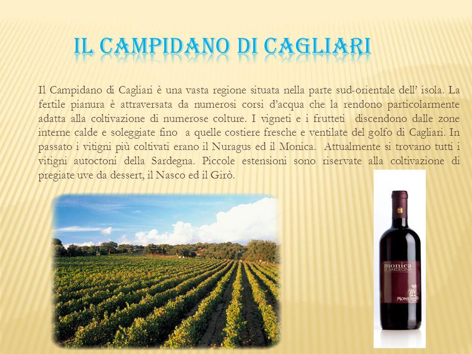 Il Campidano di Cagliari è una vasta regione situata nella parte sud-orientale dell' isola. La fertile pianura è attraversata da numerosi corsi d'acqu