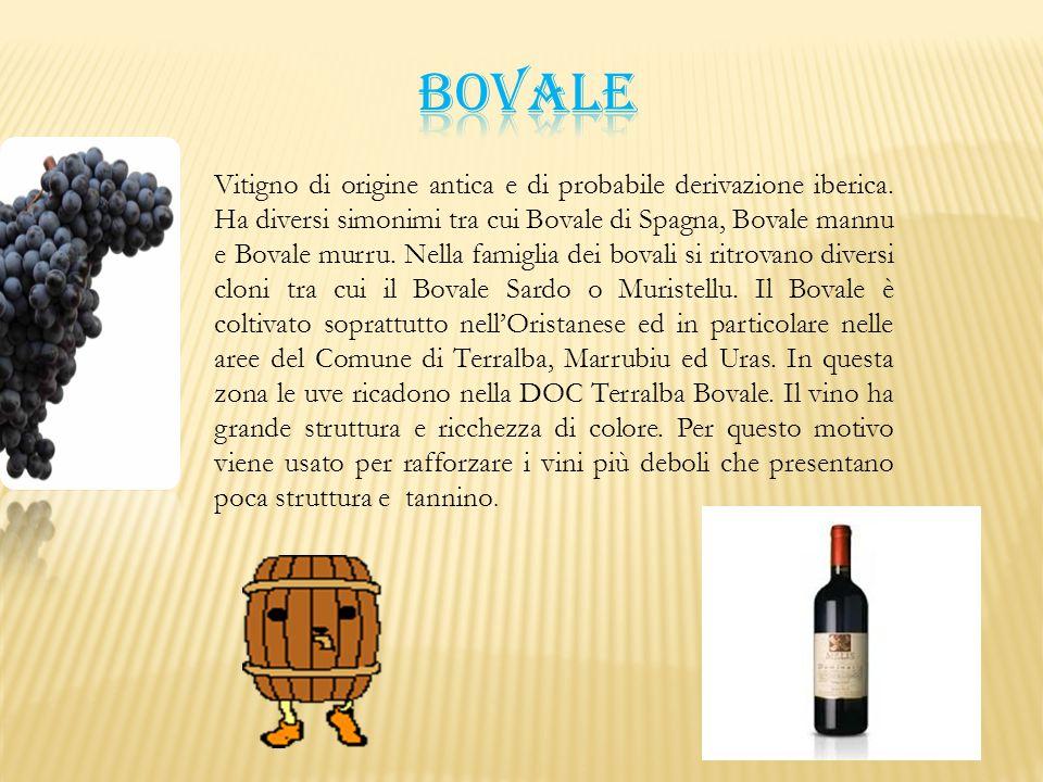 Vitigno di origine antica e di probabile derivazione iberica. Ha diversi simonimi tra cui Bovale di Spagna, Bovale mannu e Bovale murru. Nella famigli