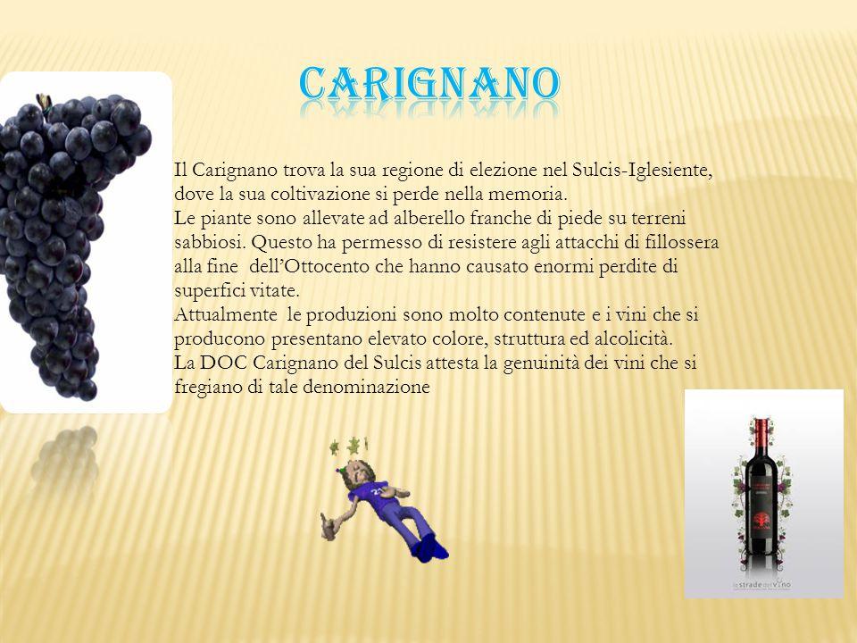 Il Carignano trova la sua regione di elezione nel Sulcis-Iglesiente, dove la sua coltivazione si perde nella memoria. Le piante sono allevate ad alber
