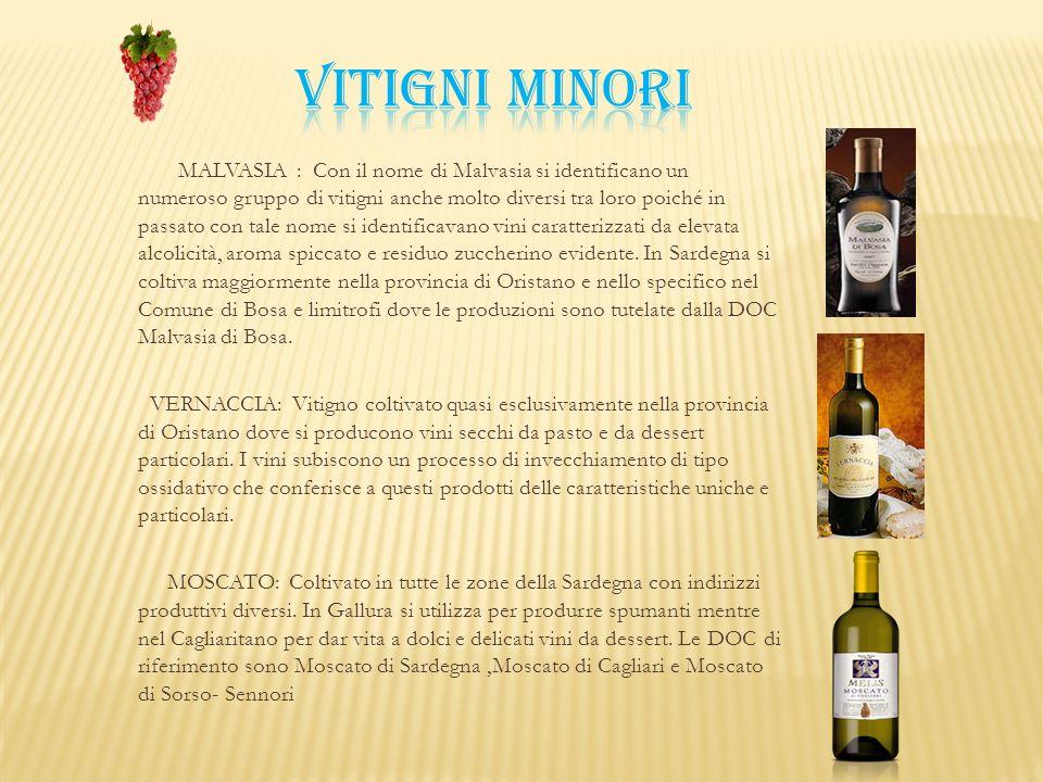 MALVASIA : Con il nome di Malvasia si identificano un numeroso gruppo di vitigni anche molto diversi tra loro poiché in passato con tale nome si ident