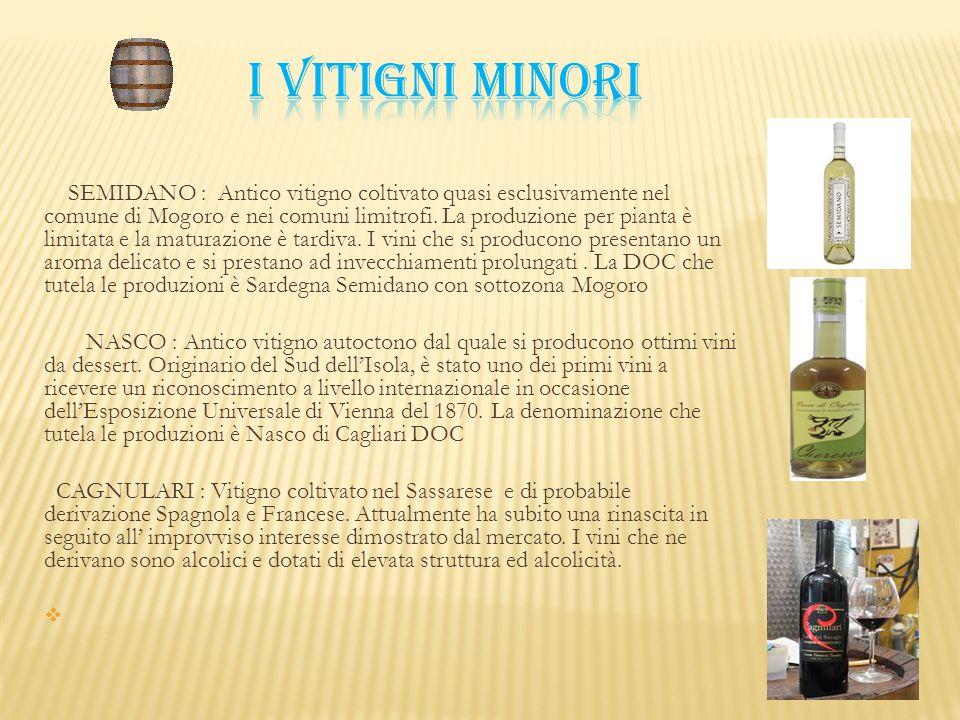 SEMIDANO : Antico vitigno coltivato quasi esclusivamente nel comune di Mogoro e nei comuni limitrofi. La produzione per pianta è limitata e la maturaz