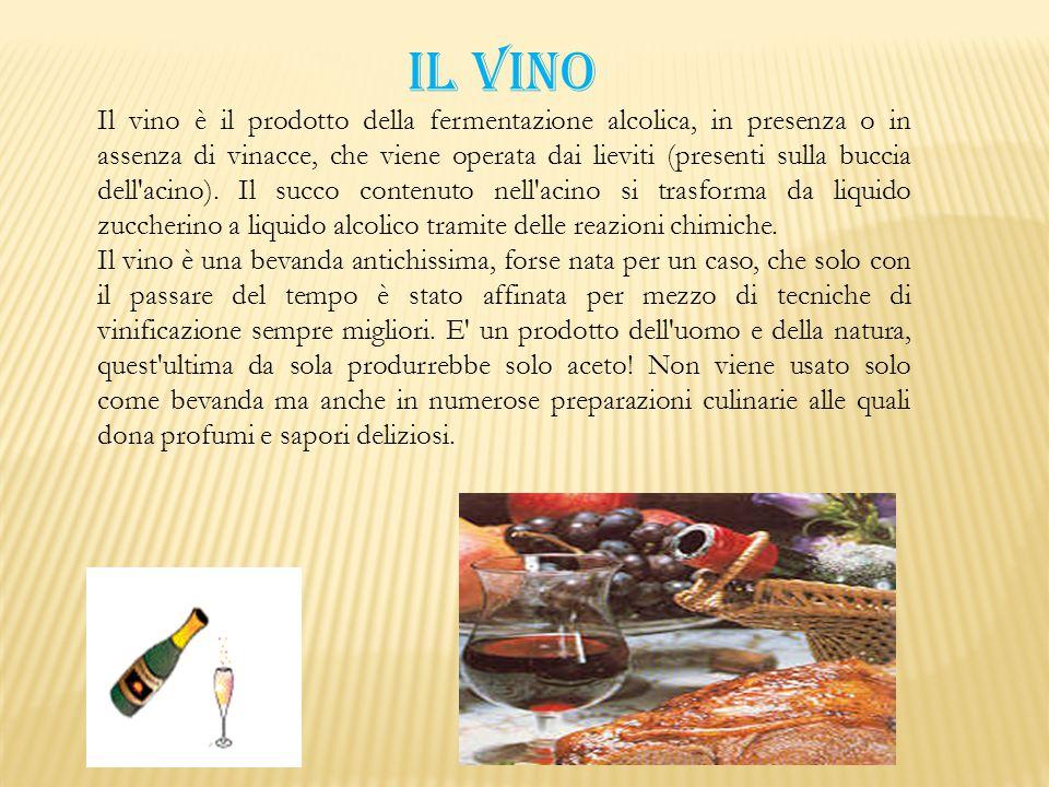 Il vino è il prodotto della fermentazione alcolica, in presenza o in assenza di vinacce, che viene operata dai lieviti (presenti sulla buccia dell'aci