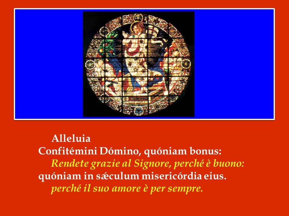 Alleluia Confitémini Dómino, quóniam bonus: Rendete grazie al Signore, perché è buono: quóniam in sǽculum misericórdia eius.