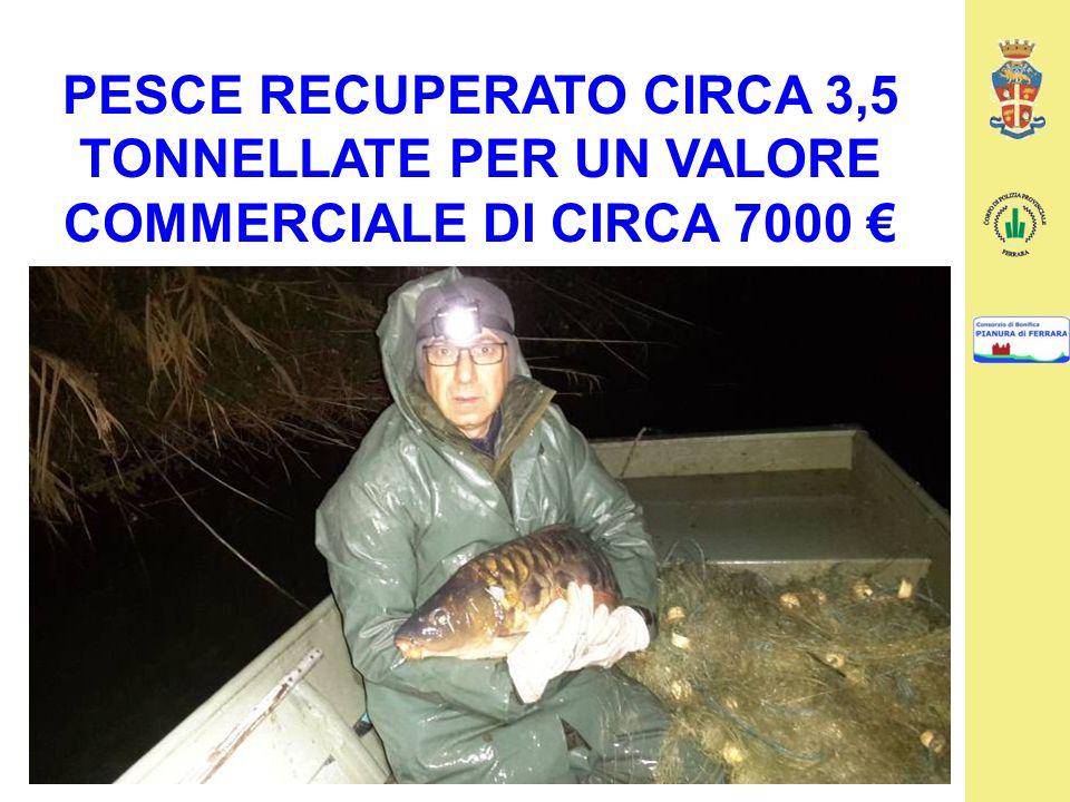 PESCE RECUPERATO CIRCA 3,5 TONNELLATE PER UN VALORE COMMERCIALE DI CIRCA 7000 €