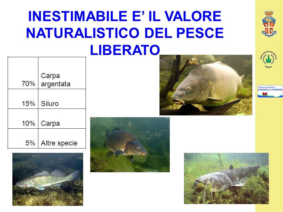 INESTIMABILE E' IL VALORE NATURALISTICO DEL PESCE LIBERATO 70% Carpa argentata 15%Siluro 10%Carpa 5%Altre specie