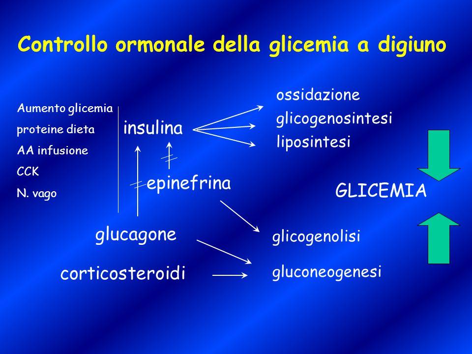 Controllo ormonale della glicemia a digiuno insulina glucagone epinefrina corticosteroidi ossidazione glicogenosintesi liposintesi glicogenolisi gluco