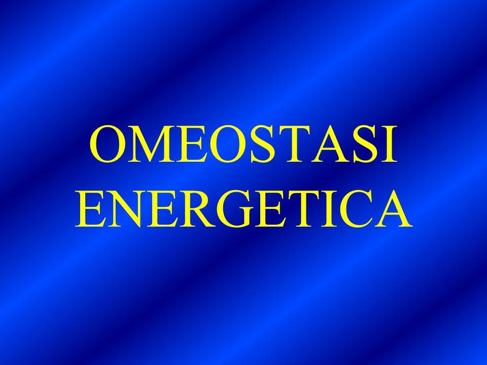 OMEOSTASI ENERGETICA
