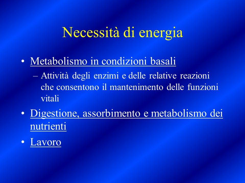 Necessità di energia Metabolismo in condizioni basali –Attività degli enzimi e delle relative reazioni che consentono il mantenimento delle funzioni v