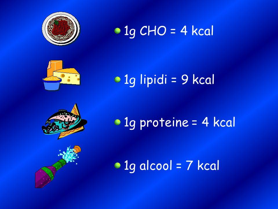 1g CHO = 4 kcal 1g lipidi = 9 kcal 1g proteine = 4 kcal 1g alcool = 7 kcal