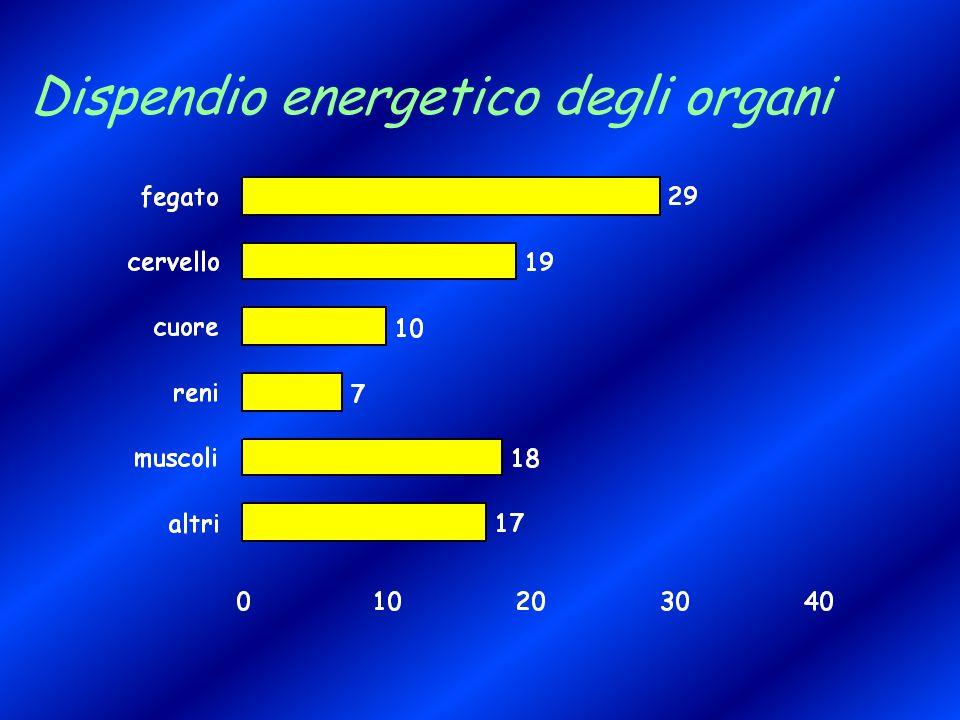 Dispendio energetico degli organi