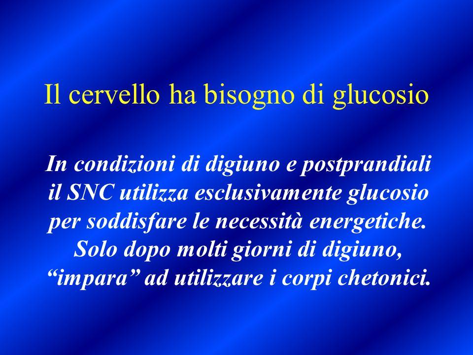 Il cervello ha bisogno di glucosio In condizioni di digiuno e postprandiali il SNC utilizza esclusivamente glucosio per soddisfare le necessità energe