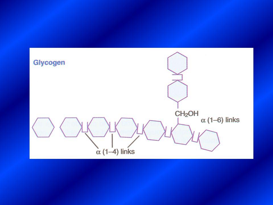 G - 1- P SintetasiFosforilasi GLUCOSIO G - 6- P Trioso - P Piruvato Acetil - CoA Acidi grassi* Glicogeno Esokinasi* PFK* Ciclodell acidoCitrico* PDH* Trigliceridi Aminoacidi Ac.