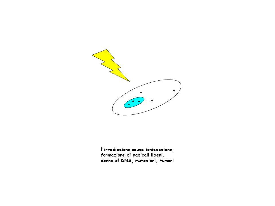 + + + - - - l'irradiazione causa ionizzazione, formazione di radicali liberi, danno al DNA, mutazioni, tumori