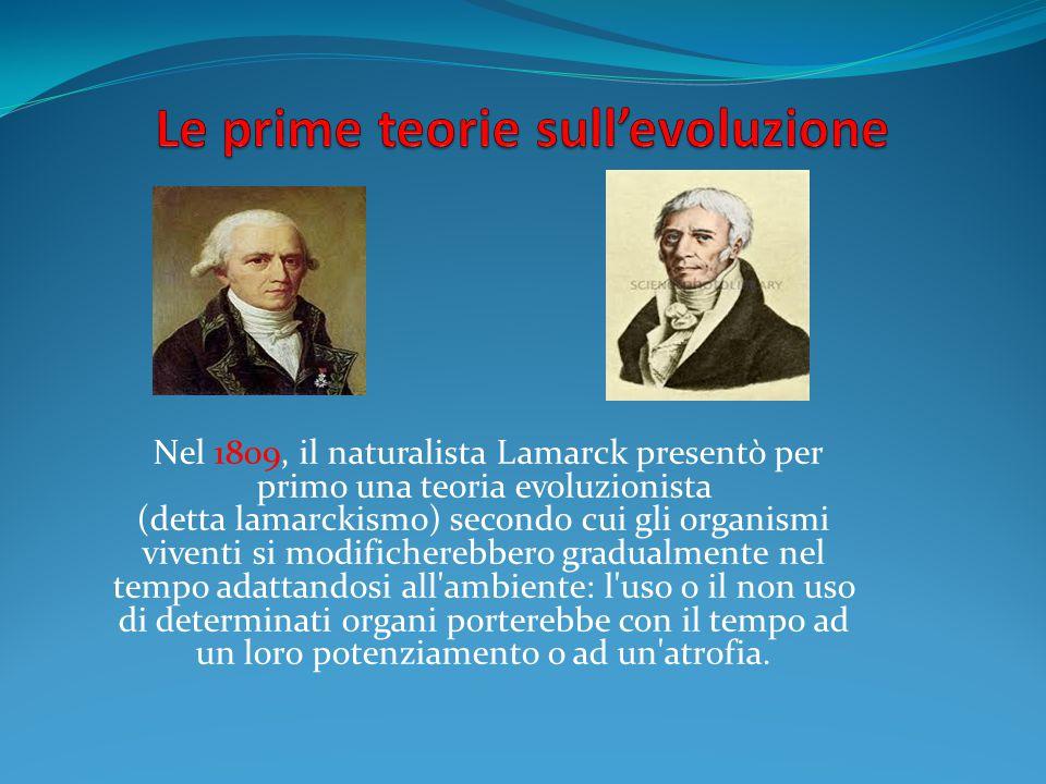 Nel 1809, il naturalista Lamarck presentò per primo una teoria evoluzionista (detta lamarckismo) secondo cui gli organismi viventi si modificherebbero gradualmente nel tempo adattandosi all ambiente: l uso o il non uso di determinati organi porterebbe con il tempo ad un loro potenziamento o ad un atrofia.
