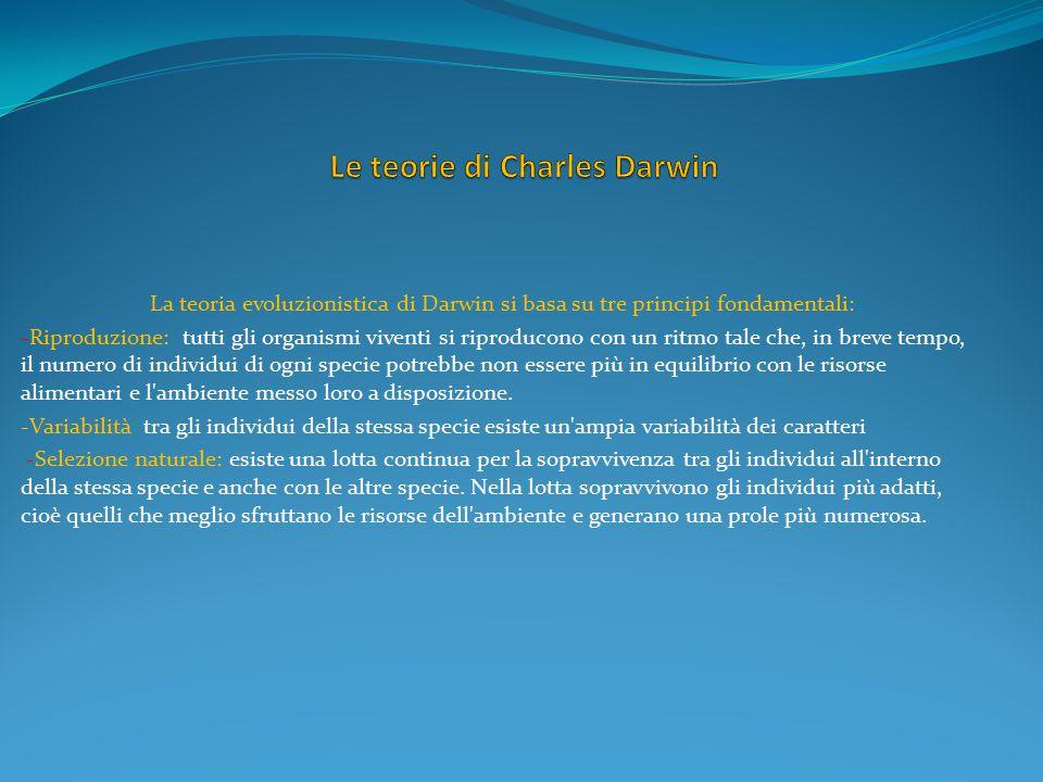 ALUNNO: IANNARIO GIANMARCO CLASSE: 1 B DOCUMENTO IN : MICROSOFT POWER POINT 2007