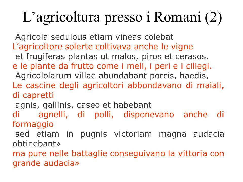 L'agricoltura presso i Romani (2) Agricola sedulous etiam vineas colebat L'agricoltore solerte coltivava anche le vigne et frugiferas plantas ut malos, piros et cerasos.