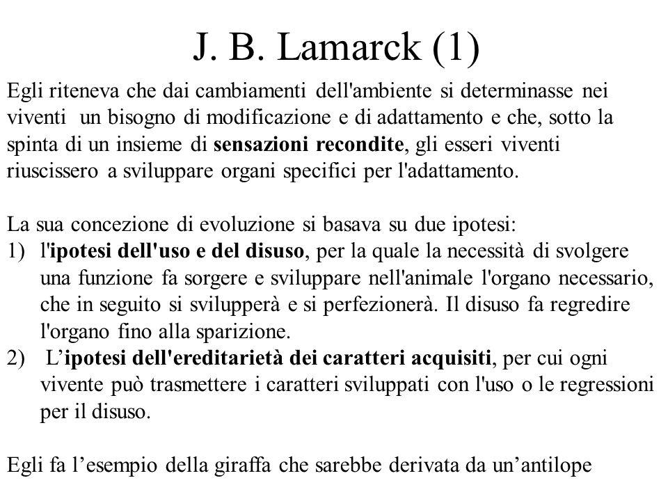 J. B. Lamarck (1) Egli riteneva che dai cambiamenti dell'ambiente si determinasse nei viventi un bisogno di modificazione e di adattamento e che, sott
