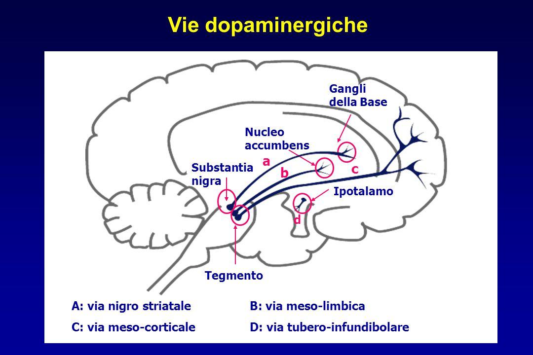 Ipotalamo d c Nucleo accumbens Tegmento b Substantia nigra Gangli della Base a Vie dopaminergiche A: via nigro striataleB: via meso-limbica C: via mes