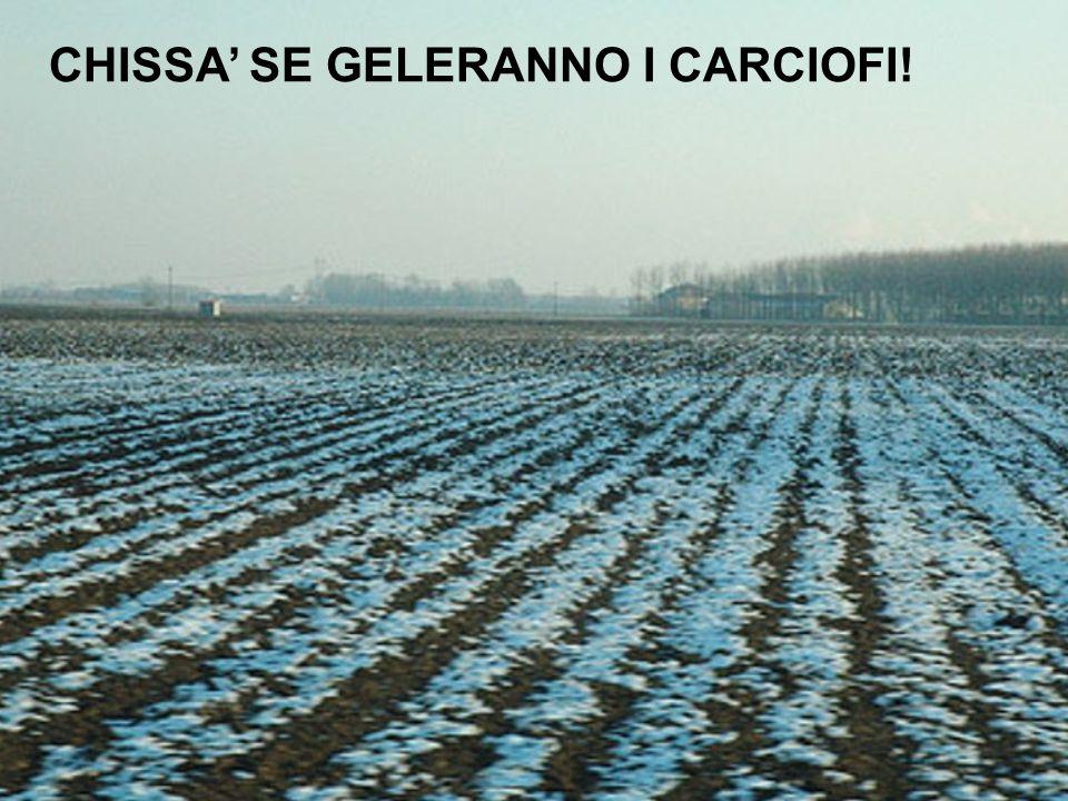 CHISSA' SE GELERANNO I CARCIOFI!