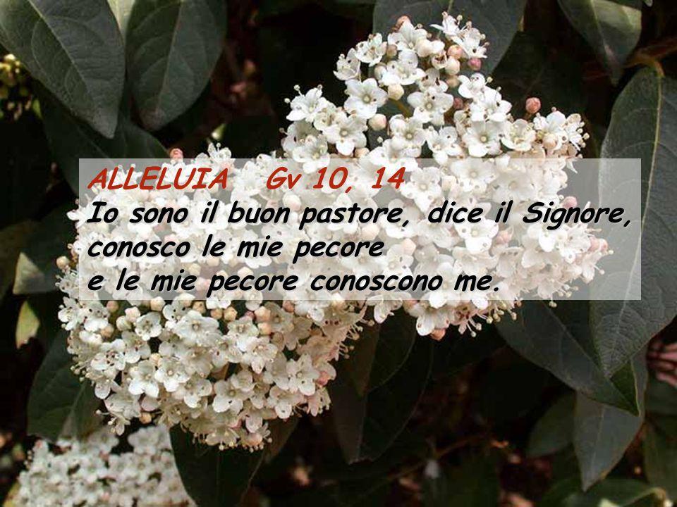 ALLELUIA Gv 10, 14 Io sono il buon pastore, dice il Signore, conosco le mie pecore e le mie pecore conoscono me.