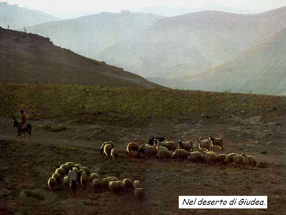 Nel deserto di Giudea.