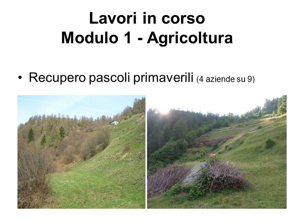 Lavori in corso Modulo 1 - Agricoltura Recupero pascoli primaverili (4 aziende su 9)