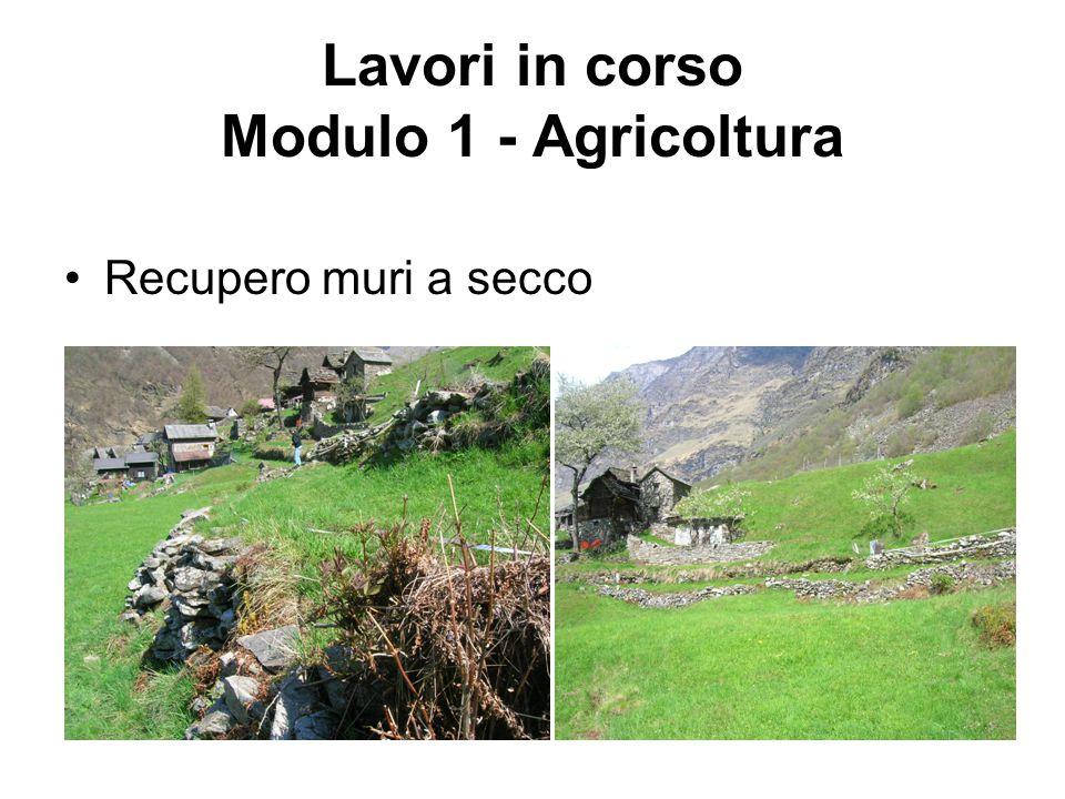 Lavori in corso Modulo 1 - Agricoltura Recupero muri a secco