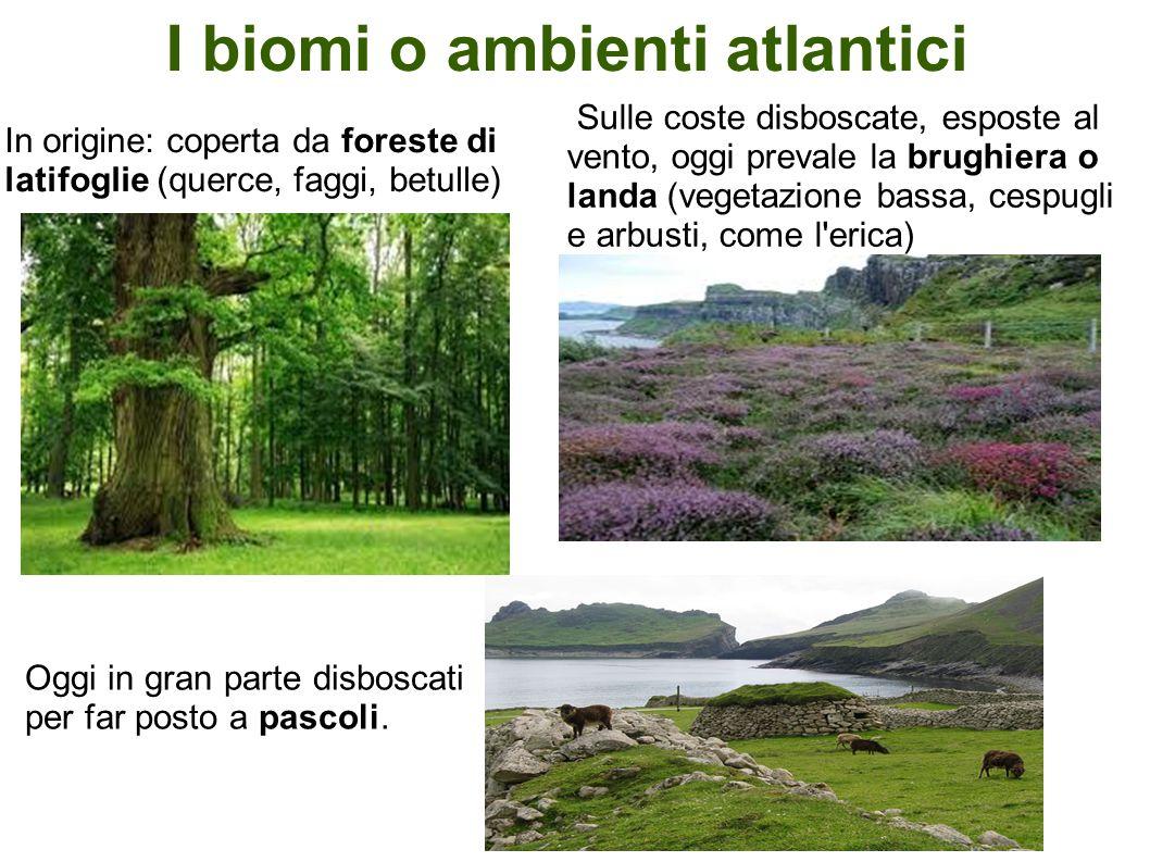I biomi o ambienti atlantici In origine: coperta da foreste di latifoglie (querce, faggi, betulle) Sulle coste disboscate, esposte al vento, oggi prev