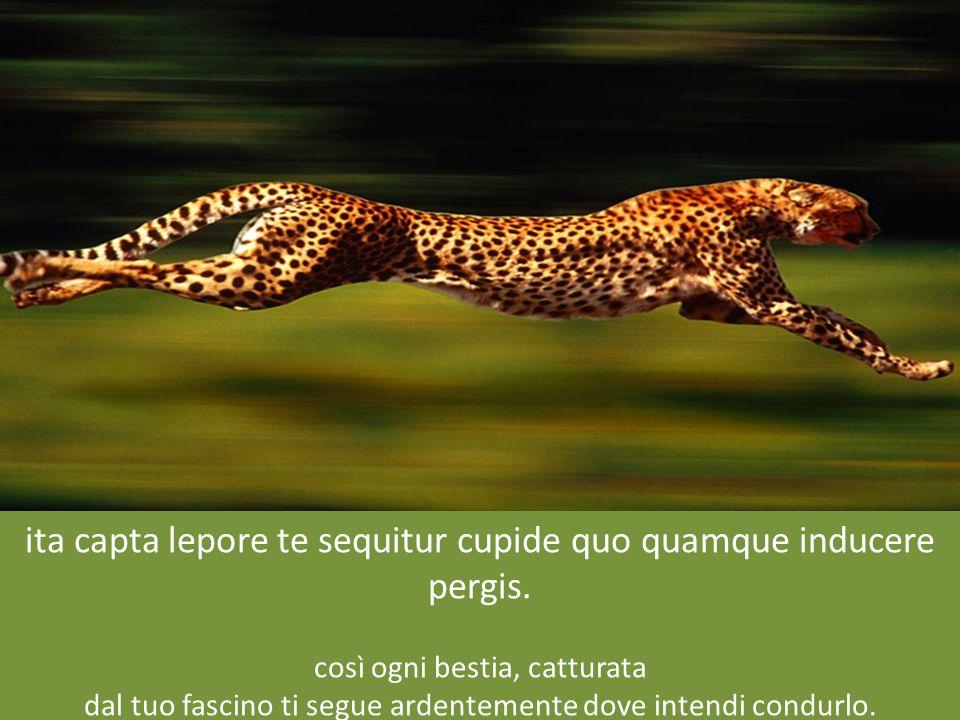 ita capta lepore te sequitur cupide quo quamque inducere pergis.