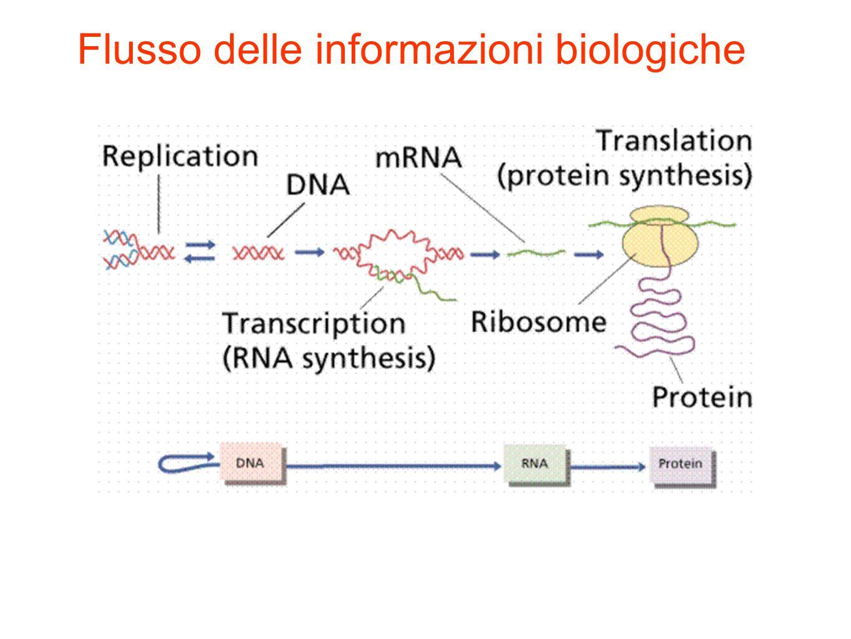 Flusso delle informazioni biologiche