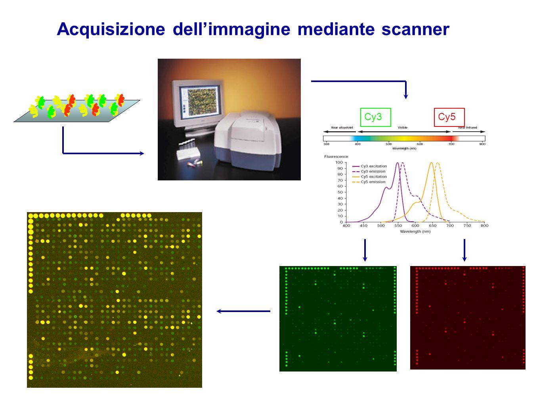 Acquisizione dell'immagine mediante scanner Cy5Cy3