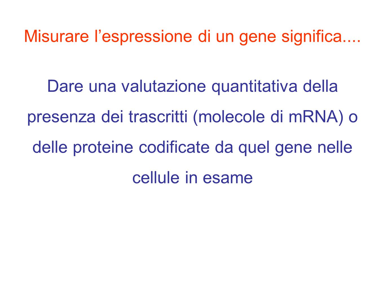 Misurare l'espressione di un gene significa.... Dare una valutazione quantitativa della presenza dei trascritti (molecole di mRNA) o delle proteine co