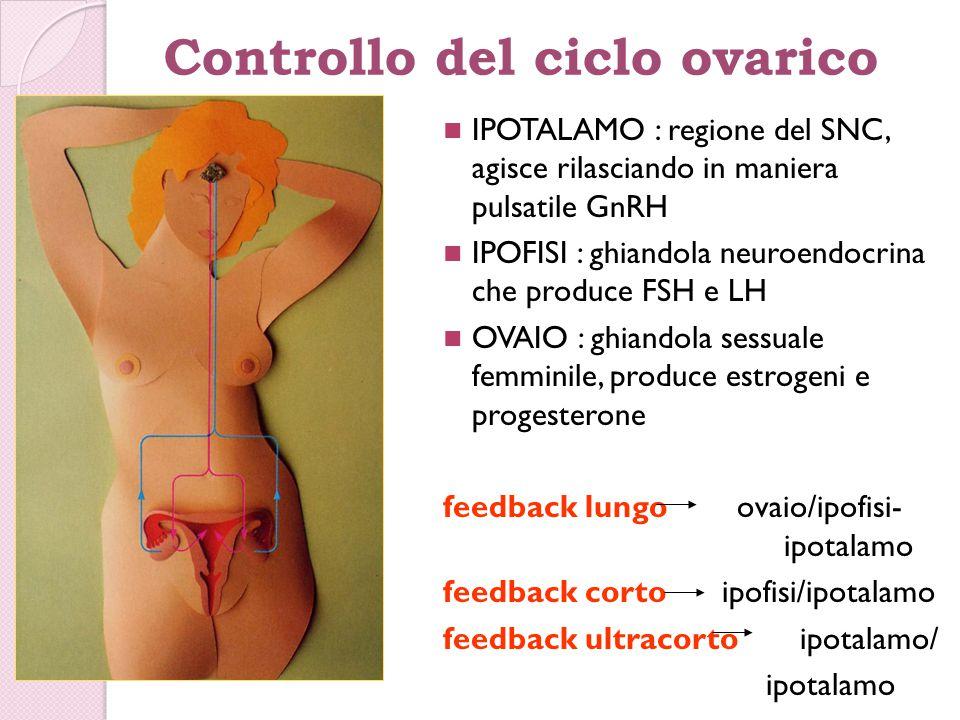 Controllo del ciclo ovarico IPOTALAMO : regione del SNC, agisce rilasciando in maniera pulsatile GnRH IPOFISI : ghiandola neuroendocrina che produce F
