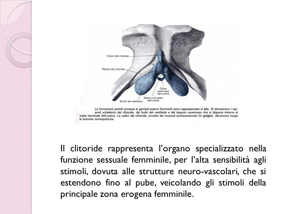 Il clitoride rappresenta l'organo specializzato nella funzione sessuale femminile, per l'alta sensibilità agli stimoli, dovuta alle strutture neuro-va