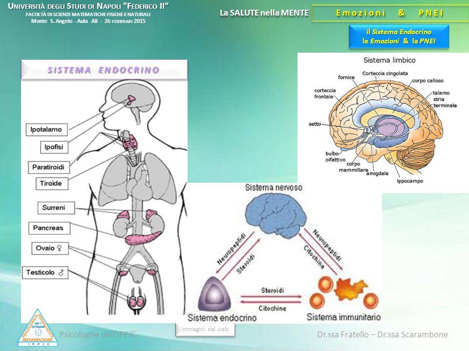 il Sistema Endocrino le Emozioni & la PNEI La SALUTE nella MENTE Emozioni & PNEI Psicologhe dell'IPPiC Dr.ssa Fratello – Dr.ssa Scarambone Immagini da