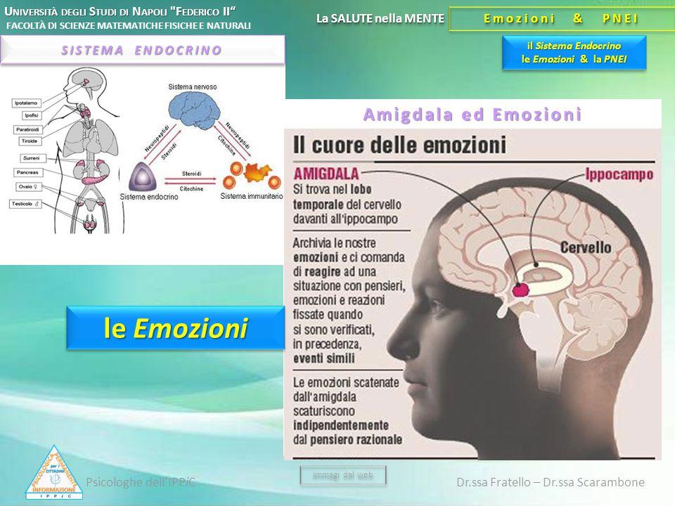 il Sistema Endocrino le Emozioni & la PNEI U NIVERSITÀ DEGLI S TUDI DI N APOLI