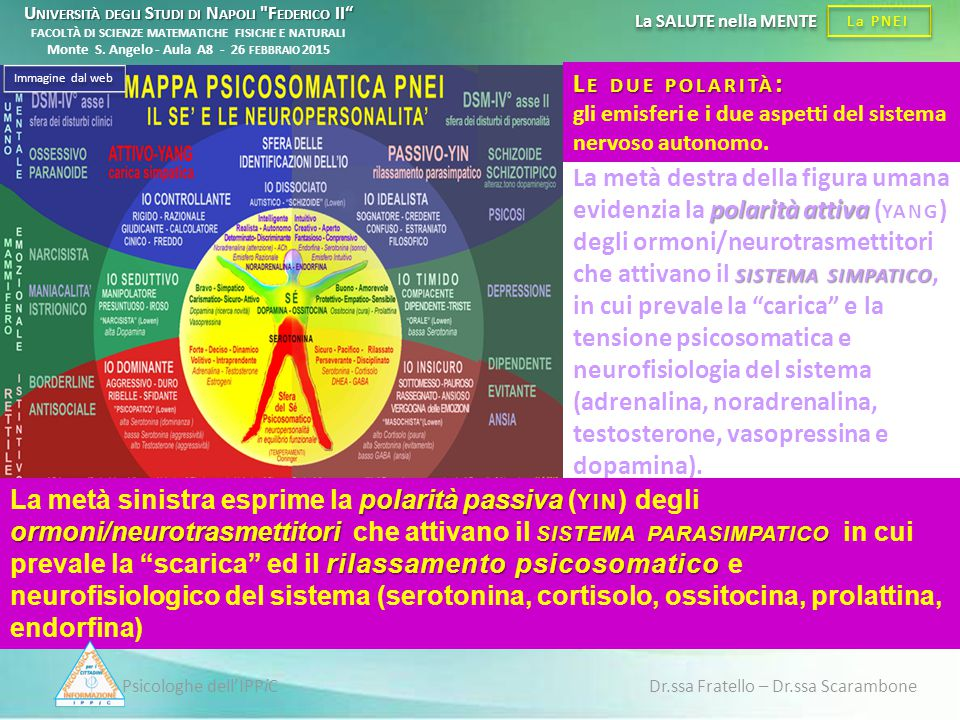 Psicologhe dell'IPPiC Dr.ssa Fratello – Dr.ssa Scarambone La PNEI La SALUTE nella MENTE polarità attiva SISTEMA SIMPATICO La metà destra della figura