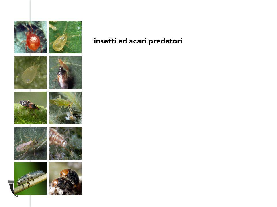 insetti ed acari predatori