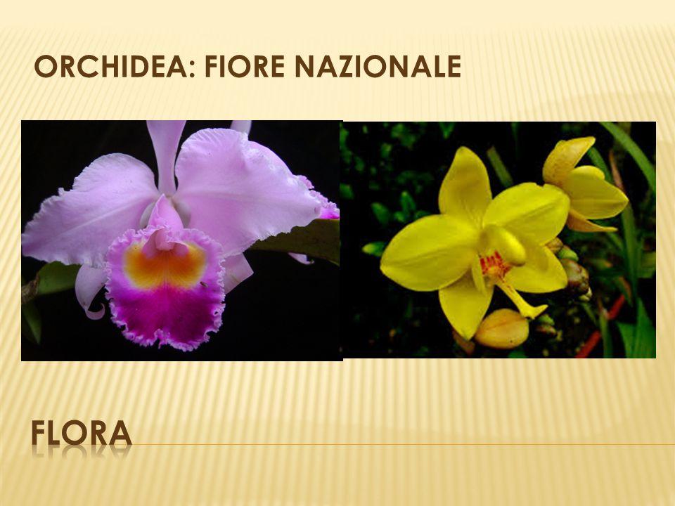 ORCHIDEA: FIORE NAZIONALE
