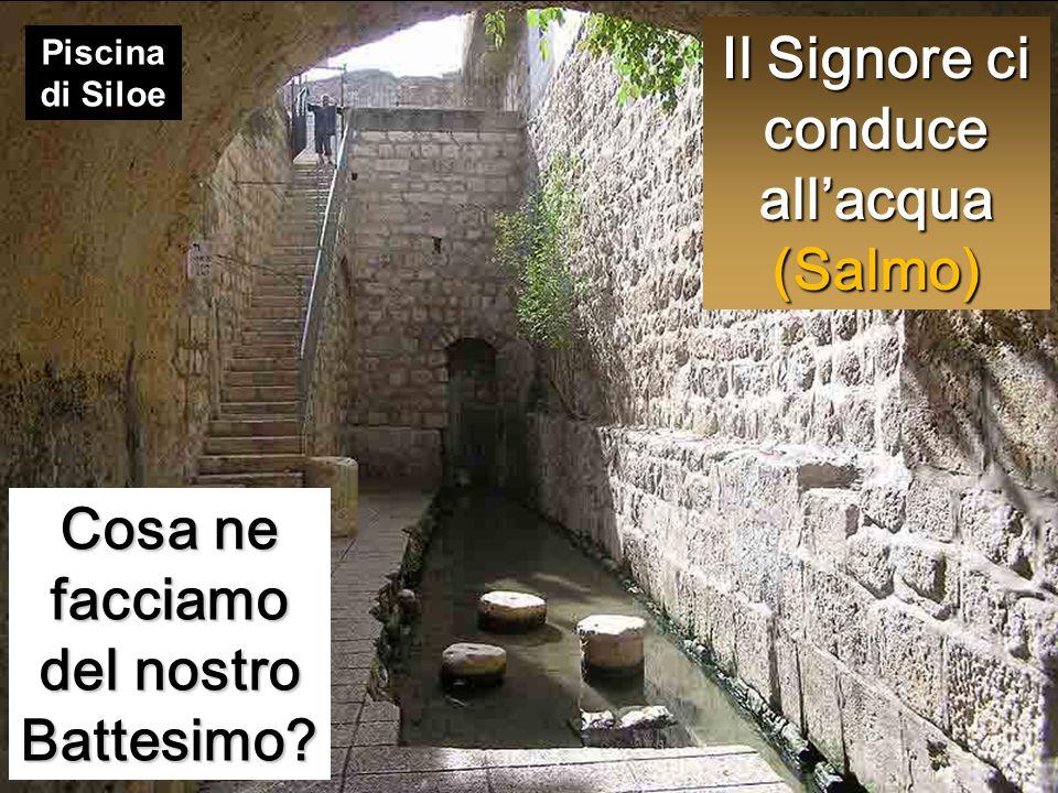 Il Signore ci conduce all'acqua (Salmo) Cosa ne facciamo del nostro Battesimo? Piscina di Siloe